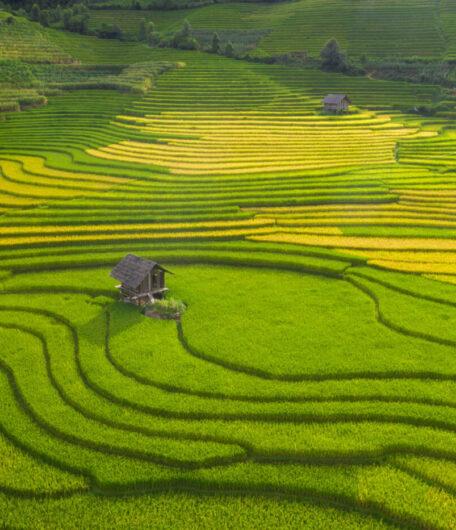 Nam Cang Rice Valley and Sapa