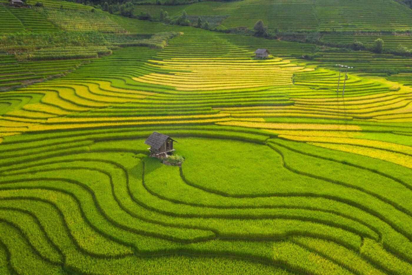 Thung lũng Nậm Cang và Mùa vàng Sapa